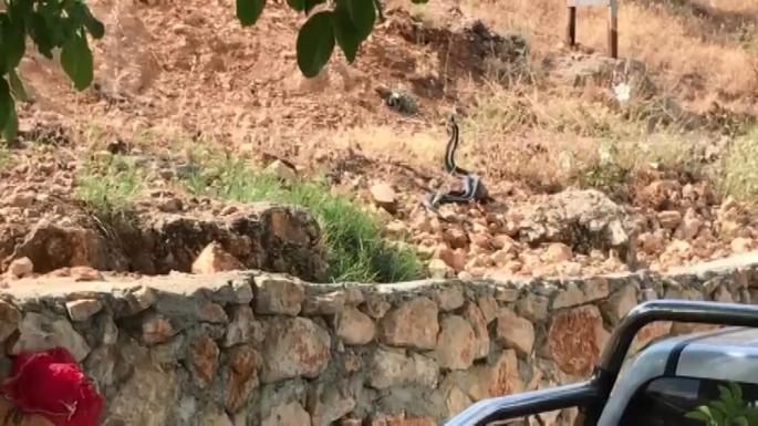 Bir tarafta zehirli yılanla konuşanlar, bir tarafta yılanı taşlayanlar