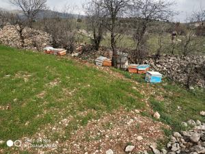 Adıyaman'da Arı Kovanlarını Çalan Zanlı Tutuklandı