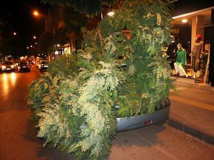 Adıyaman'da Otomobilin Üstüne Ağaç Devrildi