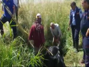 Adıyaman'da Sulama Kanalına Düşen İnek Kurtarıldı