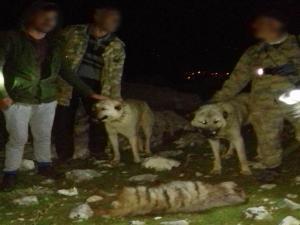 Çizgili sırtlanı öldüren 4 kişiye 30 bin lira ceza