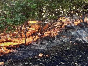 Gerger'de orman yangını