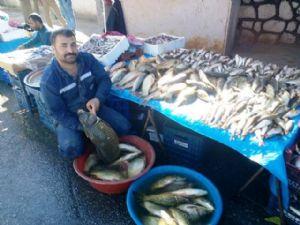 Adıyaman'da Balıkçıların Yüzü Gülüyor