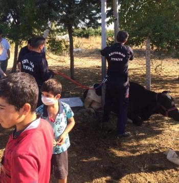 Adıyaman'da elektrik direğine sıkışan inek kurtarıldı