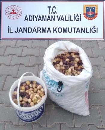 Adıyaman'da incir hırsızlığı: 1 tutuklu