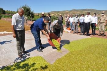 Besni'de üzüm hasadı başladı