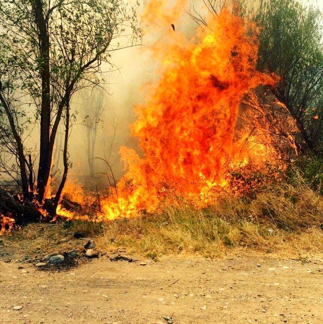 Adıyaman'da Ormanlık Bölgede Yangın