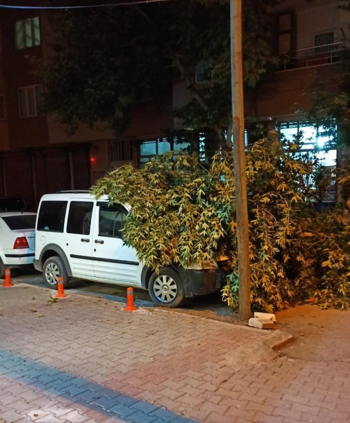 Ağaç dalı park halinki aracın üzerine düştü
