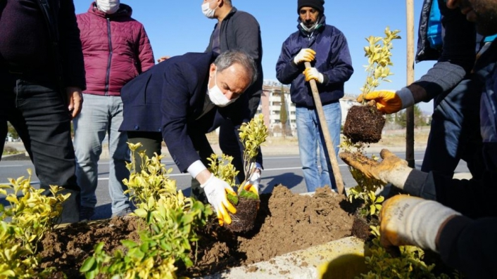 Başkan Kılınç, refüje çiçek dikti