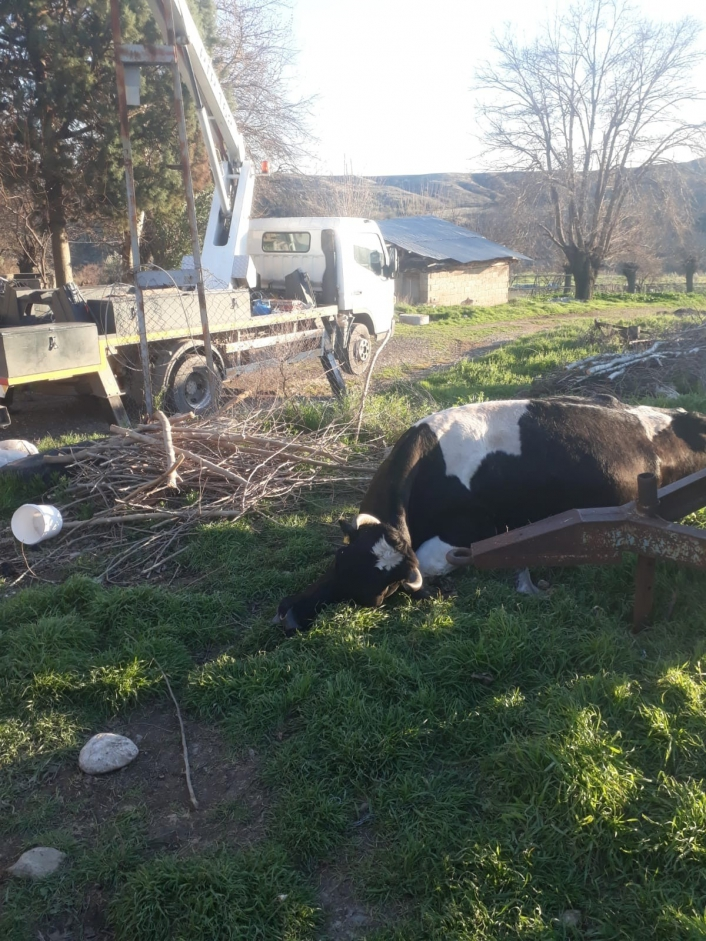 Adıyaman'da Elektrik akımına kapılan inek telef oldu