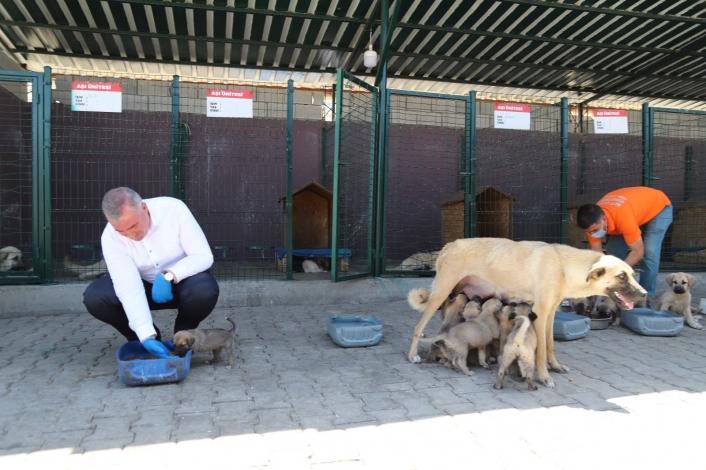 Kahta´daki hayvan barınağı bölgeye hitap ediyor