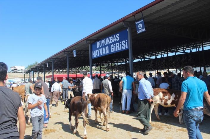 Kahta Kapalı Hayvan Pazarı hizmete açıldı