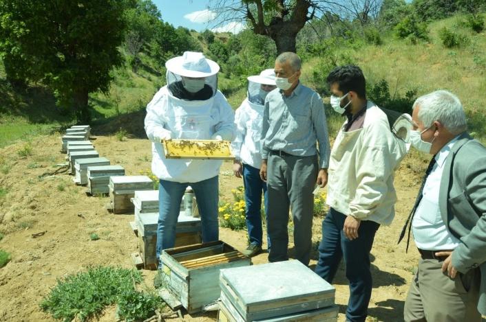 Kaymakam Uçar, bal arılarını inceledi
