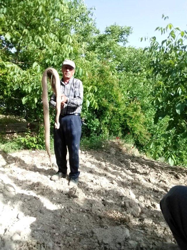 Adıyaman'da 2,5 metre uzunluğunda ki yılan etkisiz hale getirildi