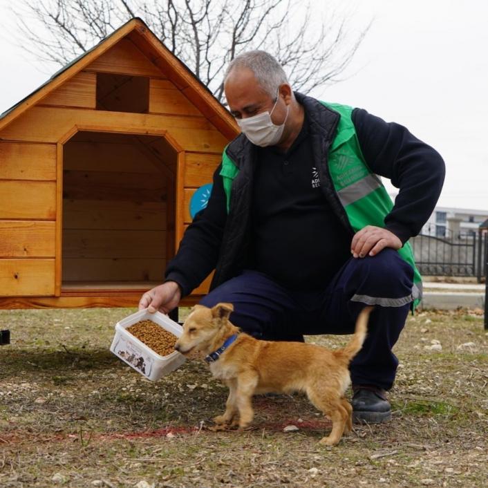 Parklara kedi ve köpek evleri kuruluyor